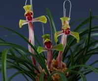 수채색설화(무명)10촉이상 꽃3경